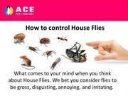 How to control House Flies