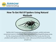 How To Get Rid Of Spiders Using Natural
