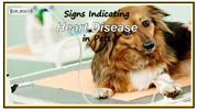 Signs Indicating Heart Disease in Pets