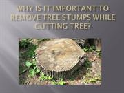Why is it important to remove tree stumps