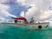 See the Underwater World in a Whole New Light with Scuba Diving