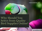 Why Should You Select from Quality Bird Supplies Online?