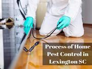 Process of Home Pest Control in Lexington SC