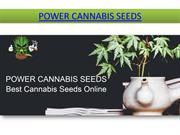 Barney's Farm Seeds | Marijuana Seeds | Best Cannabis Seeds Online