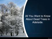 All You Want to Know About Dead Trees in Adelaide