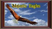 Majestic Eagles