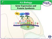 Gene Expression and Protein Synthesis