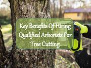 Key Benefits Of Hiring Qualified Arborists For Tree Cutting