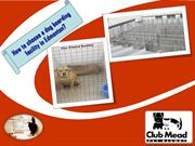 How to choose a dog boarding facility in Edmonton