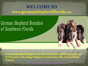 German shepherd breeder in Florida