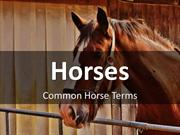 Common Horse Terms