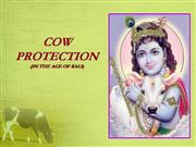 cow protection
