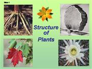 Plant structure adaptations and response
