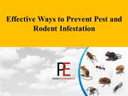 Effective Ways to Prevent Pest and Rodent Infestation