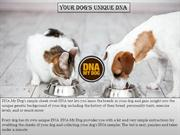 Dog DNA Test in Canada | DNA My Dog