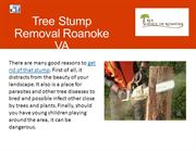 Tree Stump Removal Service in Roanoke, VA