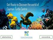 See, Learn and Explore the Cayman's Wildlife at Cayman Turtle Centre