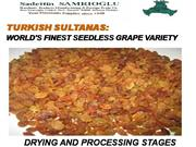 Turkish  Sultanas -  Processing Stages