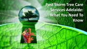 Post Storm Tree Care Services Adelaide What You Need To Know