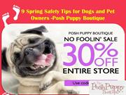 9 Spring Safety Tips for Dogs and Pet Owners -Posh Puppy Boutique