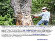 Tree Services Central Coast & Tree Lopping Newcastle