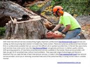 Tree Lopping Burleigh Heads & Tree Removal Tallebudgera