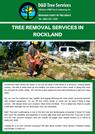 Tree Removal Services In Rockland
