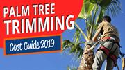 Palm Trimming Cost Guide 2019