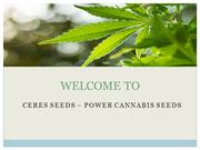Ceres Seeds Online | Cup Winner Seeds | Ceres Marijuana Seeds
