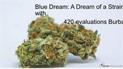 Blue Dream: A Dream of a Strain with 420 evaluations Burbank