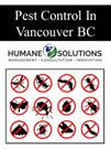 Pest Control In Vancouver BC