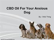 CBD Oil For Your Anxious Dog