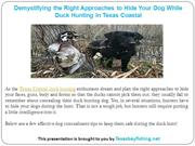 Demystifying the Right Approaches to Hide Your Dog While Duck Hunting