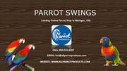 Buy Parrot and Bird Swings Online – All Parrot Products