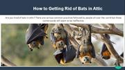 How-to-Getting-Rid-of-Bats
