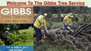 For Professional Tree Service Hot Springs AR Call Gibbs Tree Service