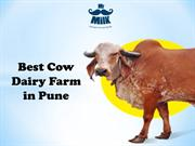 Best Cow Dairy Farms in pune