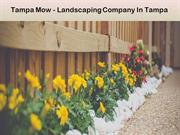 Tampa Mow - Landscaping Company In Tampa