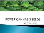 Cannabis Seeds in UK | Marijuana Seeds in UK | Weed Seeds in UK