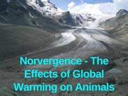 Norvergence - A Threat To Animal Species of Global Warming
