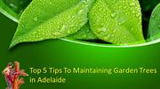 Top 5 Tips To Maintaining Garden Trees in Adelaide