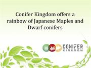 Conifer Kingdom offers a rainbow of Japanese Maples and Dwarf conifers
