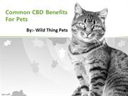 Common CBD Benefits For Pets
