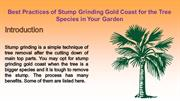 Best Practices of Stump Grinding Gold Coast for the Tree Species in Yo