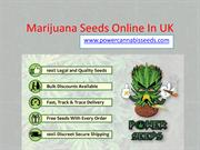 Marijuana Seeds Online In UK | Cannabis Seeds In UK | Cannabis Seeds