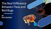 The Real Difference Between Fleas and Bed Bugs