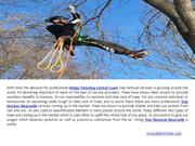 Tree Lopping Central Coast & Tree Removal Newcastle