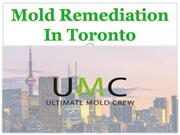 Mold Remediation In Toronto