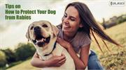 Tips on How to Protect Your Dog from Rabies