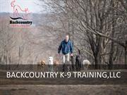 Why Should You Get Your Dog Professional Training